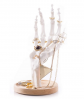 Suck UK Skeleton Hand Ring Holder & Organizer